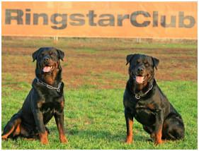 Cainele Rottweiler: standardul rasei, caracteristici, defecte