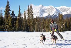 Sporturi pentru caini si oameni - Skijoring